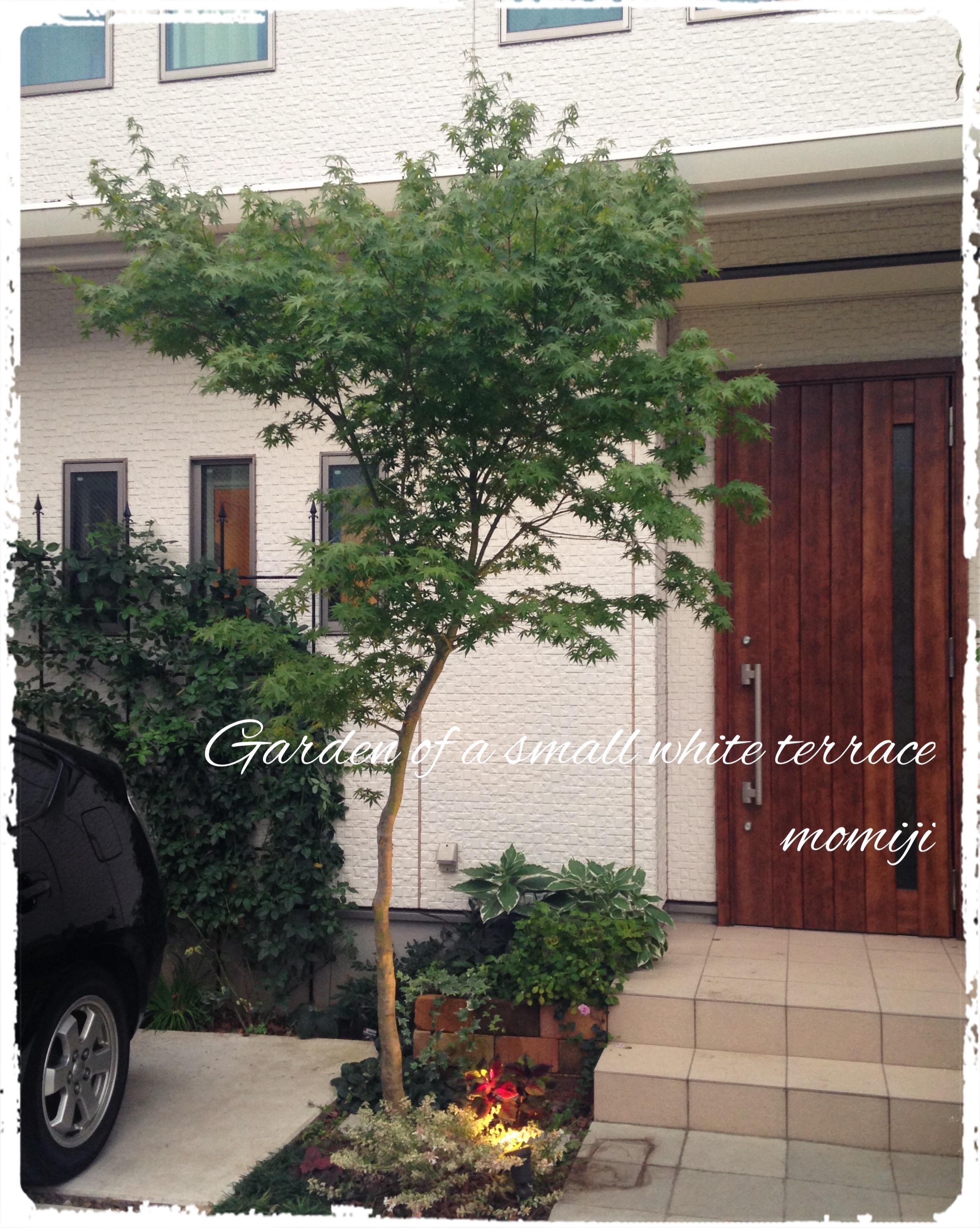 玄関アプローチ 日陰花壇