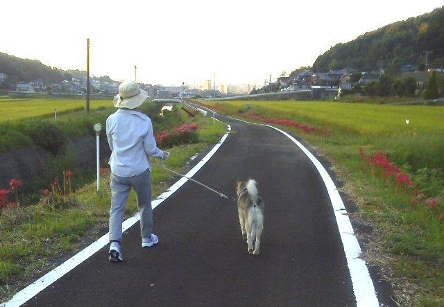 夕散歩メイン通り