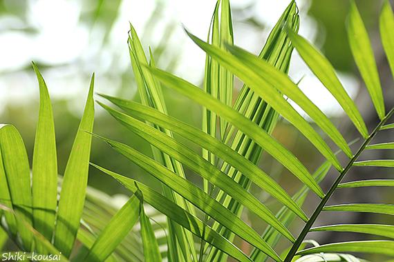 熱帯植物園にて