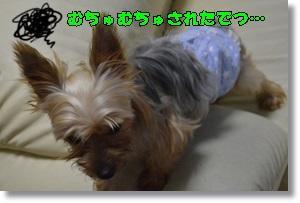 DSC_0660_201508270656011e8.jpg