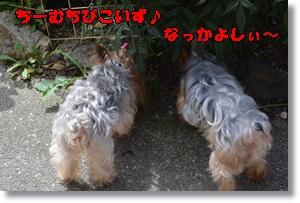 DSC_0680_201509062319447bd.jpg