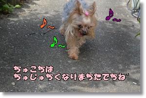 DSC_0684_201509062320410b2.jpg