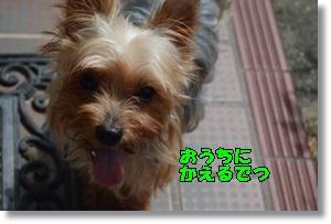 DSC_0686_20150906232039998.jpg