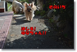 DSC_0787_20150923144356a3c.jpg