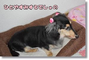DSC_0828_20150927230925dfd.jpg