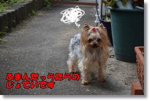 DSC_0834_201509272309300cc.jpg