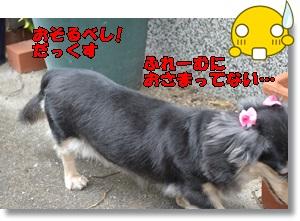 DSC_0836_2015092723101461b.jpg