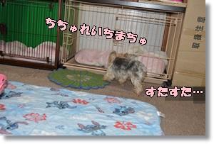 DSC_0866_20151006000947140.jpg