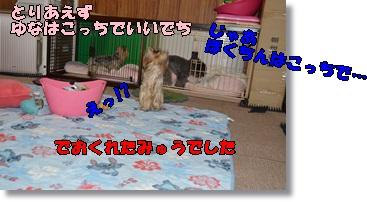 DSC_0883_20151006001054531.jpg