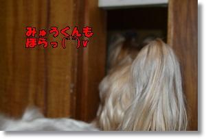 DSC_0887_20151006001058131.jpg