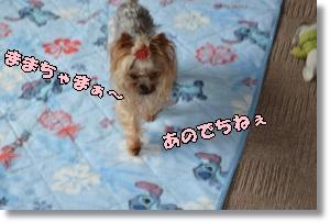 DSC_0915_2015101800302111c.jpg