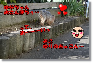 DSC_0919_2015101900053328e.jpg