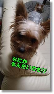 DSC_1647.jpg