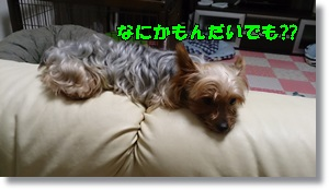 DSC_1653.jpg