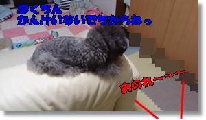 DSC_1654.jpg