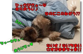 IMG_0464.jpg