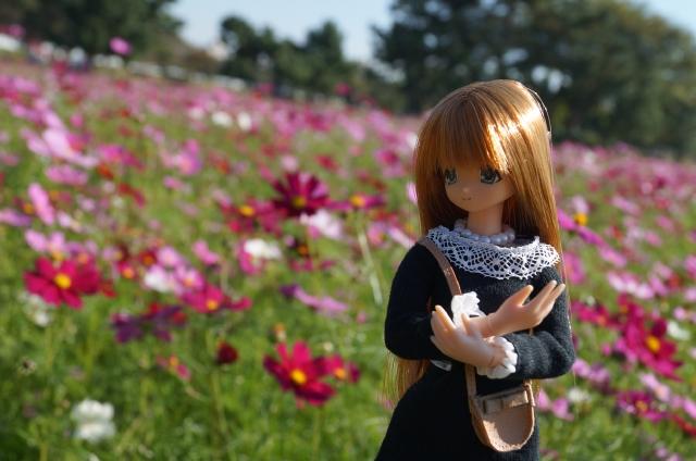 DSC02521_20151019211229fed.jpg