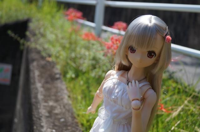 DSC09923_20150922155100c56.jpg