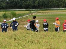 稲刈り159-4