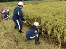 稲刈り159-7