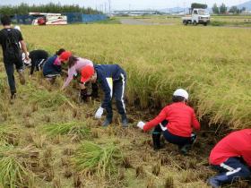 稲刈り159-10