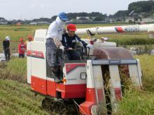 稲刈り159-12