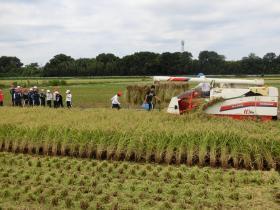 稲刈り159-14