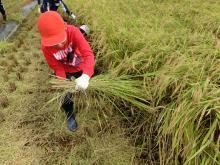 稲刈り159-9