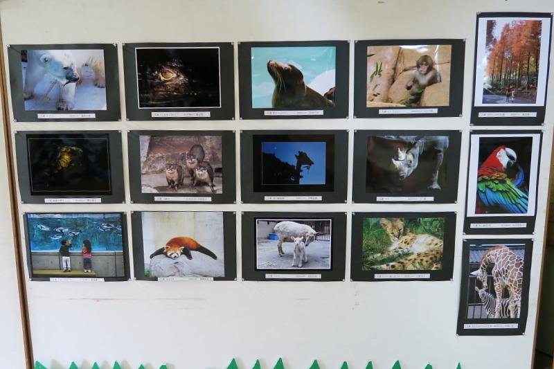 第4回とべ動物園写真コンクール