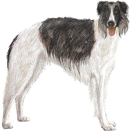 ボルゾイ犬