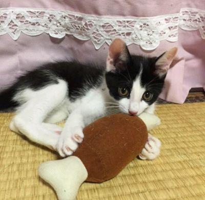ミニモグ→ロー