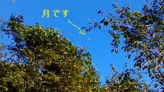 P_20150823_155327_LL.jpg