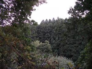 150917杉林
