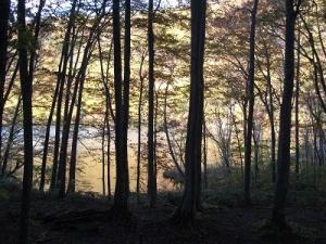 151015林間から蔦沼