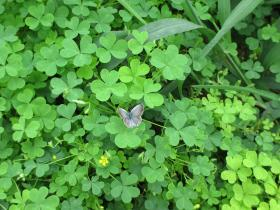神戸北野、クロ―と蝶