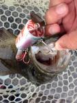 150820野尻湖釣れ釣れプラ - 6