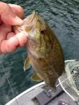 150820野尻湖釣れ釣れプラ - 13