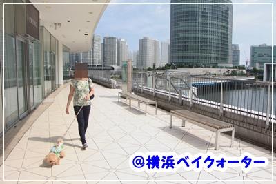 IMG_4591 (2)