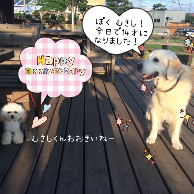 むさしくん!14歳おめでとう(^o^)