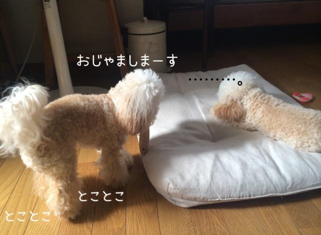 モコはジャイ子なの?10