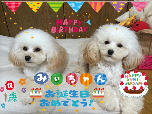 2015.10.4 みぃちゃん1歳お誕生日