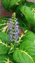 小さな蝶が2