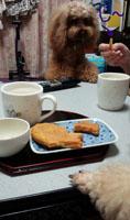3時 鯛焼き 芋8