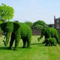 緑色のゾウ