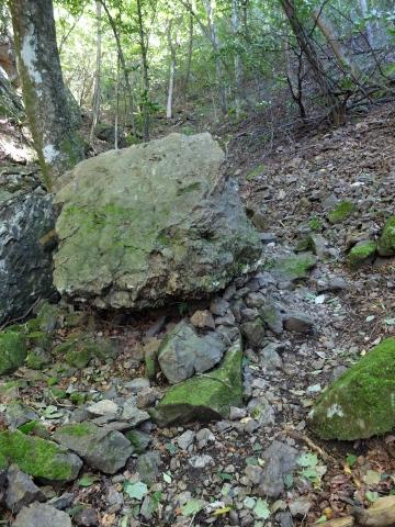 ダイモンジソウの岩