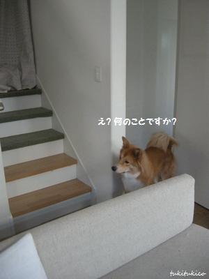 階段ボロボロ7