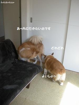 和室のドア4