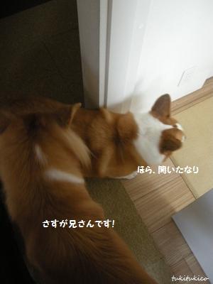 和室のドア5