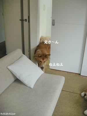 和室のドア6