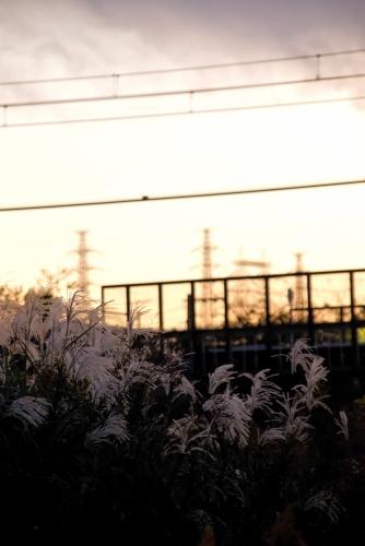 PPG_senrotosusuki-thumb-autox1000-13405.jpg